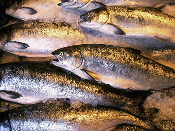 Fish exports grow by 200 tons to over 1400 tons in Armenia last year: expert