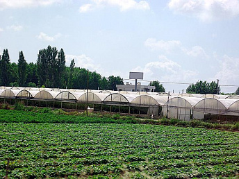 Agriculture grew by 9.5% in Armenia in 2012, minister says